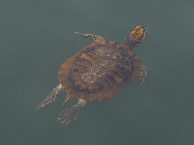turtle_s.jpg